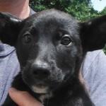 Adoptable Georgia Dogs for September 8, 2014