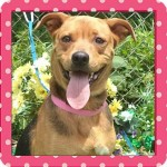 Adoptable Georgia Dogs for September 19, 2014
