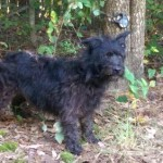Adoptable Georgia Dogs for September 24, 2014