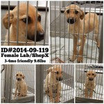 Adoptable Georgia Dogs for September 23, 2014