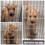 Adoptable Georgia Dogs for February 6, 2014