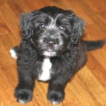 Adoptable Georgia Dogs for September 9, 2014