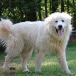 Adoptable Georgia Dogs for September 2, 2014