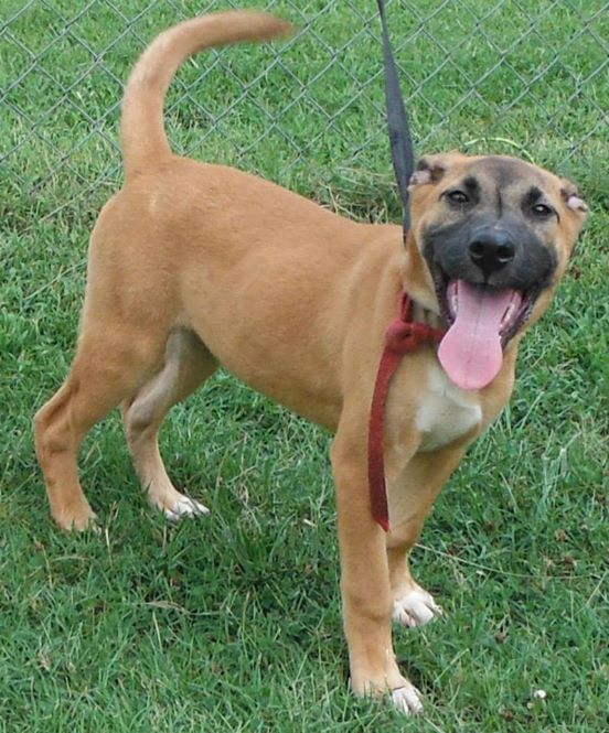 Hunting Dogs For Adoption In Ga