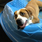 Adoptable Georgia Dogs for August 26, 2014