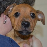 Adoptable Georgia Dogs for October 9, 2014