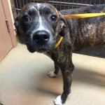 Adoptable Georgia Dogs for October 15, 2014