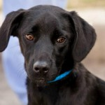 Adoptable Georgia Dogs for October 13, 2014