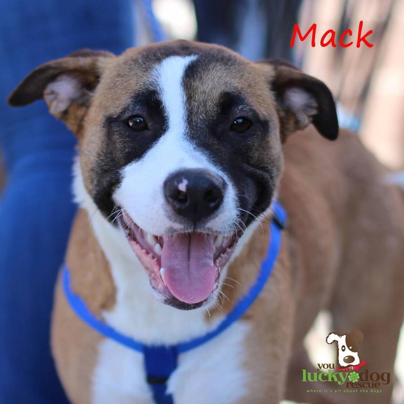 Mack Boxer