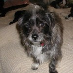 Adoptable Georgia Dogs for October 2, 2014