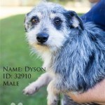Adoptable Georgia Dogs for November 7, 2014