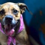 Adoptable Georgia Dogs for November 19, 2014