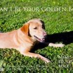 Adoptable Georgia Dogs for November 10, 2014