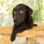 Adoptable Georgia Dogs for October 27, 2014
