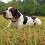 Adoptable Georgia Dogs for November 18, 2014