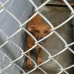 Adoptable Georgia Dogs for November 28, 2014