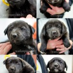 Adoptable Georgia Dogs for November 14, 2014