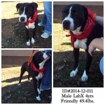 Adoptable Georgia Dogs for December 15, 2014
