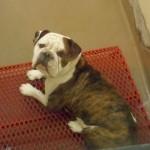 Adoptable Georgia Dogs for December 16, 2014