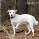 Adoptable Georgia Dogs for December 5, 2014