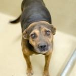 Adoptable Georgia Dogs for December 1, 2014