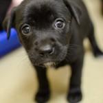 Adoptable Georgia Dogs for December 18, 2014