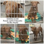 Adoptable Georgia Dogs for December 23, 2014