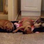 Adoptable Georgia Dogs for December 3, 2014