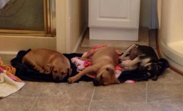 MOAS Puppies