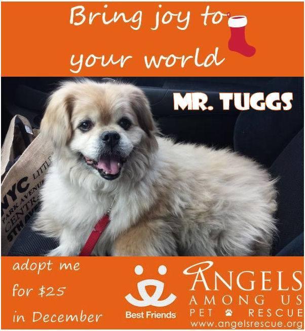 Mr Tuggs