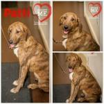 Adoptable Georgia Dogs for December 31, 2014