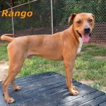 Adoptable Georgia Dogs for December 9, 2014