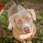 Adoptable Georgia Dogs for January 5, 2015