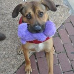 Adoptable Georgia Dogs for January 26, 2015