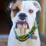 Adoptable Georgia Dogs for January 27, 2015