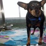 Adoptable Georgia Dogs for January 28, 2015