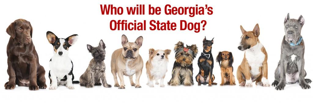 Official Georgia Dog Header