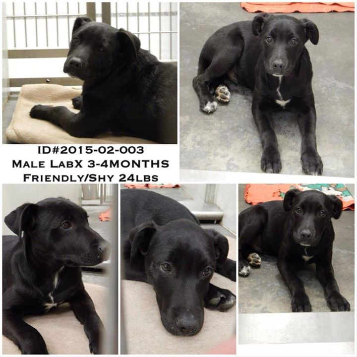 Barrow Male Lab