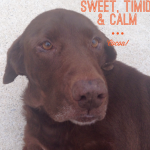 Adoptable Georgia Dogs for February 23, 2015
