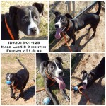 Adoptable Georgia Dogs for February 18, 2015