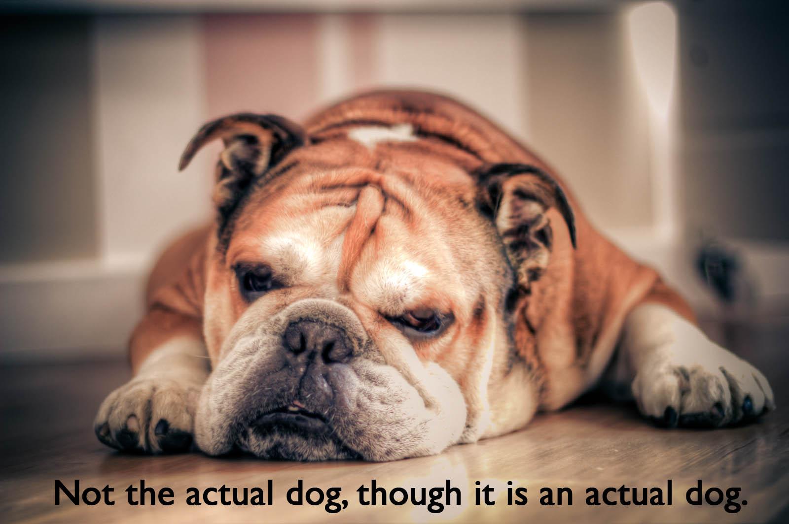 Generic Bulldog