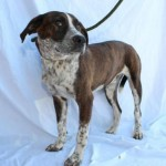 Adoptable Georgia Dogs for February 10, 2015