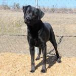 Adoptable Georgia Dogs for February 25, 2015