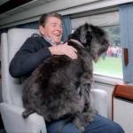 Adoptable Georgia Dogs for February 6, 2015