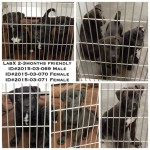 Adoptable Georgia Dogs for March 27, 2015