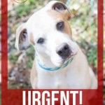 Adoptable Georgia Dogs for March 24, 2015
