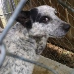 Adoptable Georgia Dogs for March 20, 2015