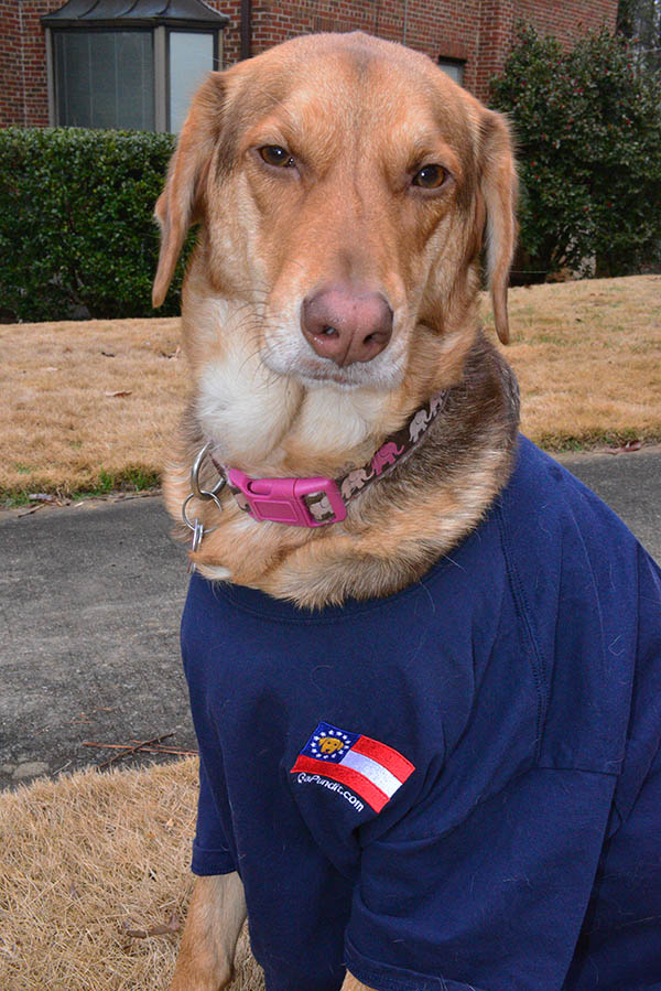 Dolly Dog Shirt