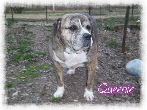 QueenieChatsworth