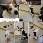Adoptable Georgia Dogs for March 17, 2015